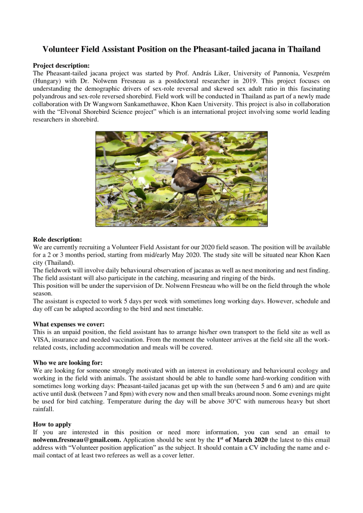 Volunteer position_Pheasant-tailed jacana_Thailand_short-1