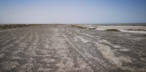KP_Aibi Lake_nest site