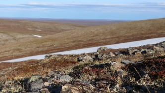 Dotterels breeds at low densities and a successful nest search require knowledge of preferred microhabitats and a lot of kilometres walked across the mountain tundra in a suitable time.